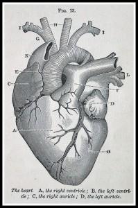 Dibujo corazón