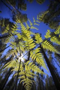 Plantas hojas